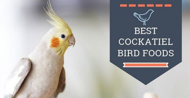Cockatiel Bird Best Food Recipes, Brands And Cockatiel Care