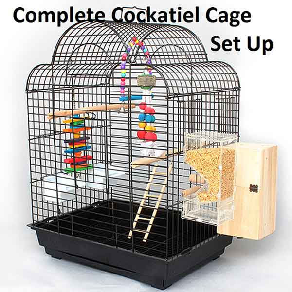Complete Cockatiel Cage Set Up
