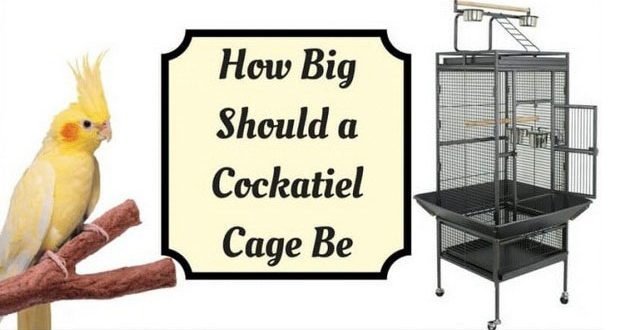 Best Cockatiel Cage Size