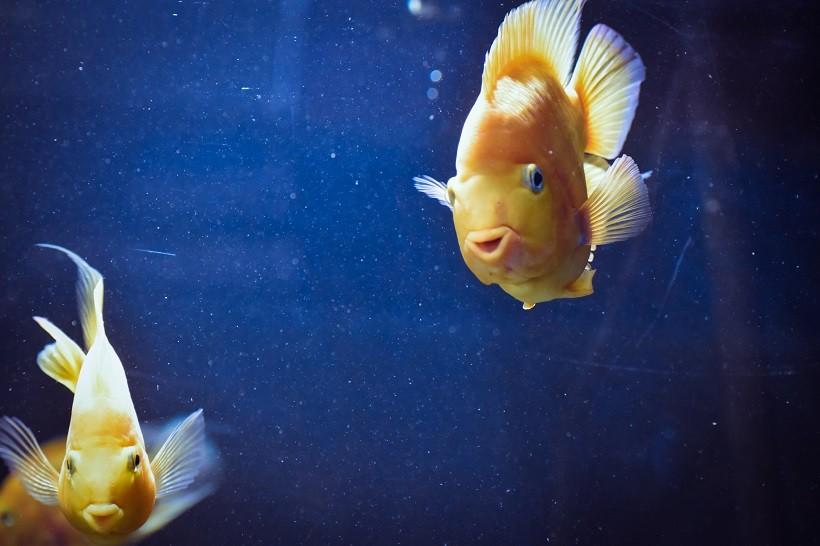 Fish Drinking Water
