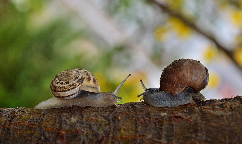 How Long Do Snails Sleep