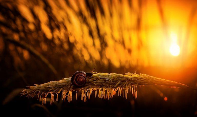 How do snails sleep