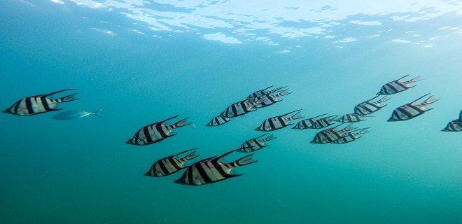 Who Do Fish Swim