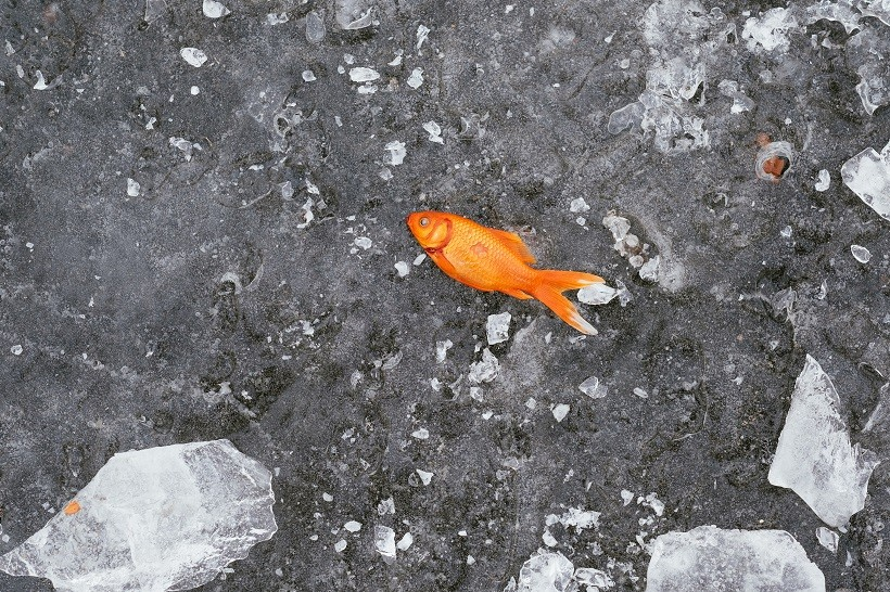 Why do fish die in water