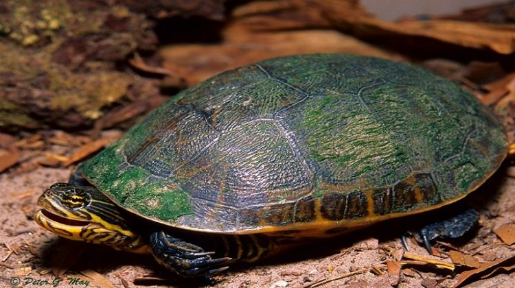 How to Take Care of a Turtle Complete Guideline