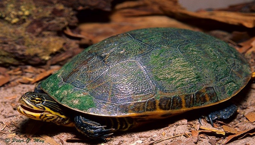 How to Take Care of a Turtle; Complete Guideline