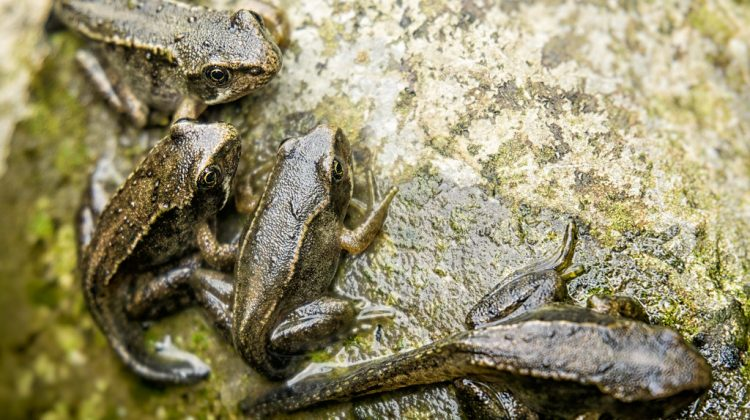 Tadpoles to Frogs Complete Tadpole Life Cycle