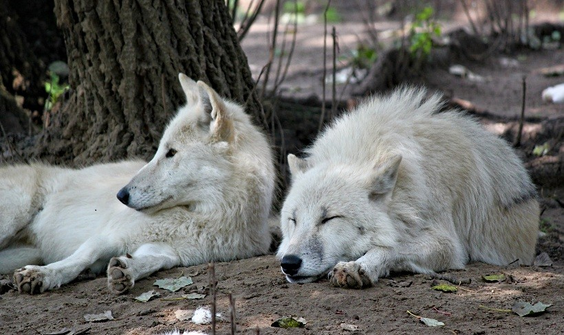 Animals That Mate For Life are Wolves, Seahorses,Gibbons etc