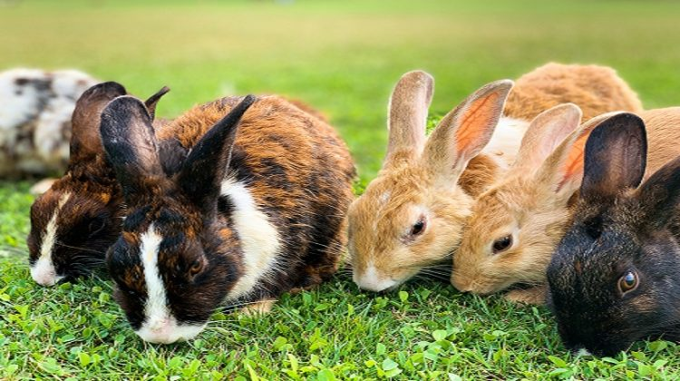 How Long Do Rabbits Live In Forests, Grasslands, Wetlands & Meadows