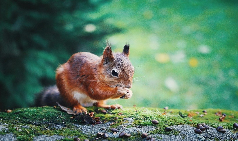 What Do Baby Squirrels Eat: