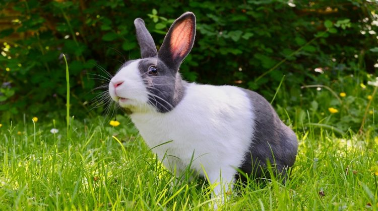 What Do Rabbits Eat And Drink As Baby, Pet And Wild?
