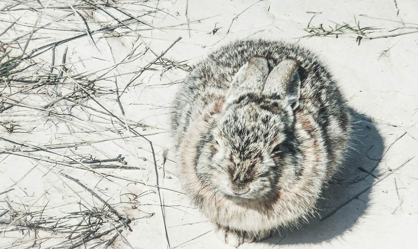 What Do Rabbits Eat In Winter