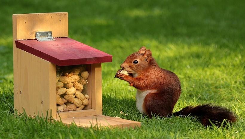 Are Squirrels Omnivores?