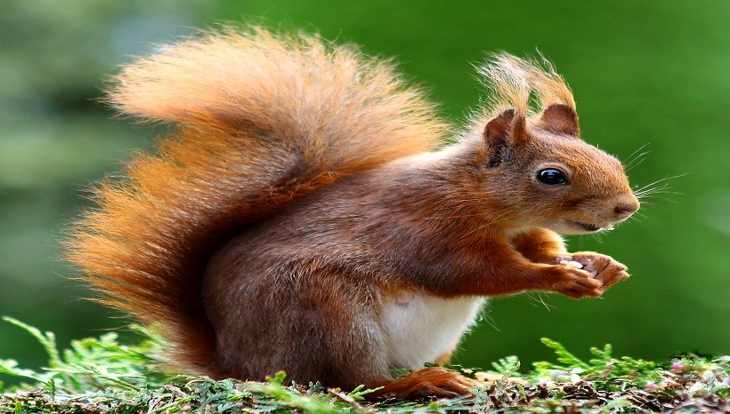 Do Squirrels Carry Rabies, Are Squirrels Nocturnal, Omnivores?