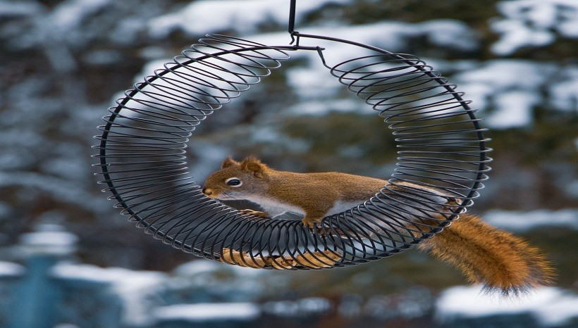 How To Keep Squirrels Out Of Bird Feeders?