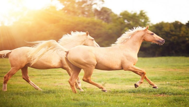 how-much-horsepower-does-a-horse-have