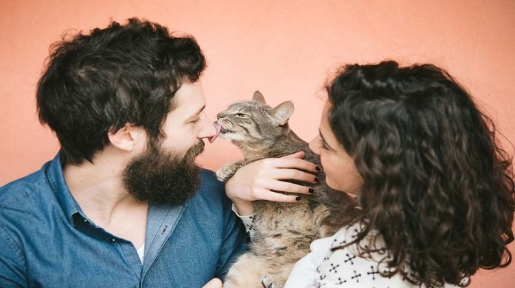 Why Does My Cat Lick Me? About Cats Behaviour