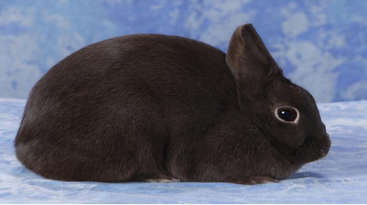 Polish Rabbit Breeders