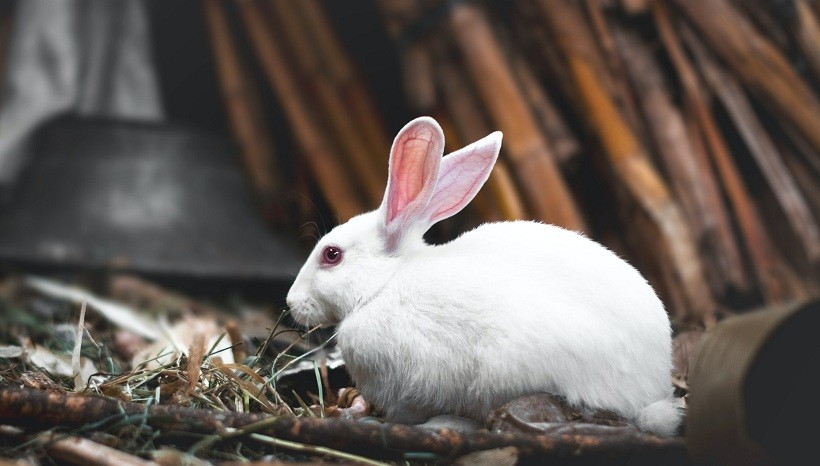 Signs Of Depressed Rabbit