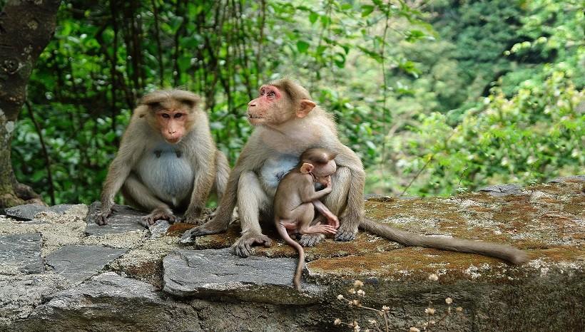 Monkeys Behaviors