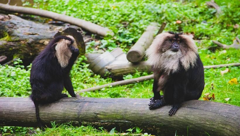 Monkeys Care