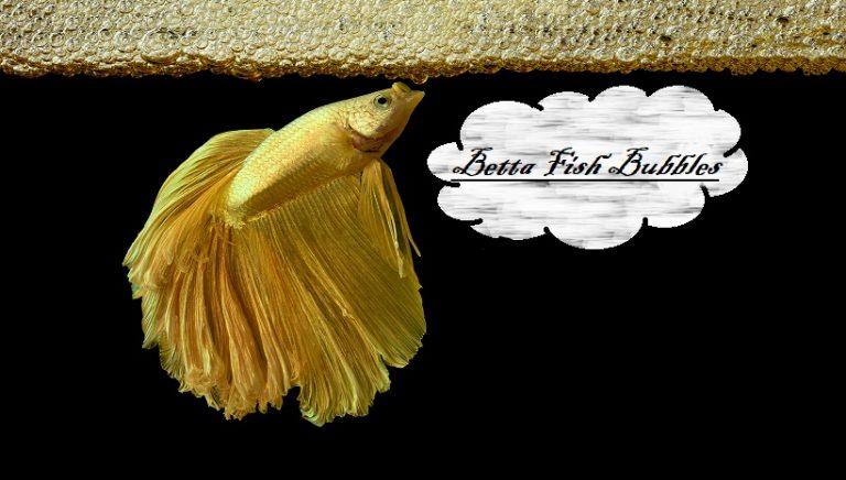 Betta Fish Bubbles