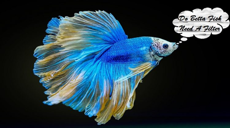 Do Betta Fish Need A Filter? | Best Filter, Types, Costs