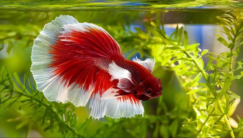 Do betta fish like light