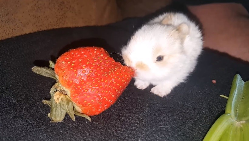 Can Bunnies Eat Strawberries