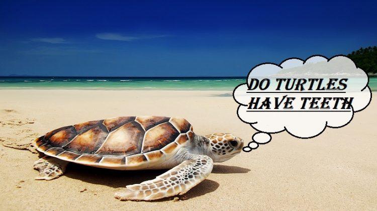 Do Turtles Have Teeth | Complete Facts | Petshoods