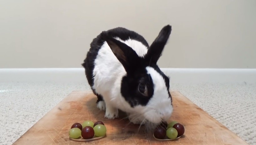 Can Rabbits Eat Red Or Green Grapes