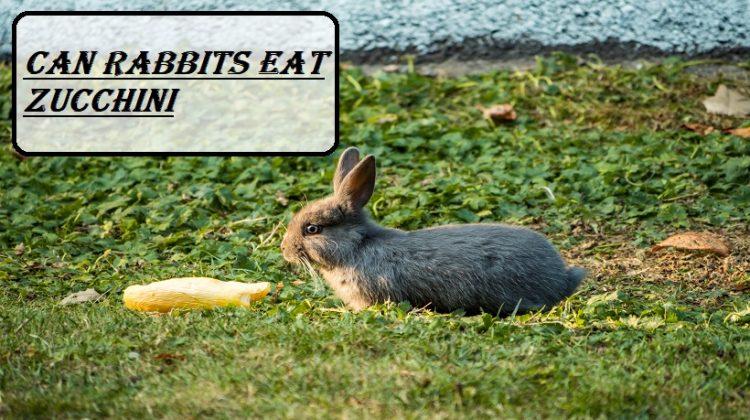 Can rabbits eat Zucchini