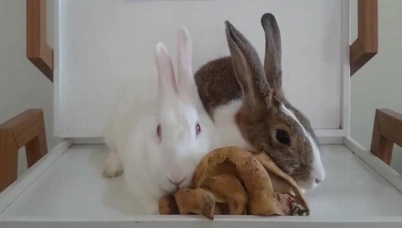 Can rabbits eat potato peels or skins