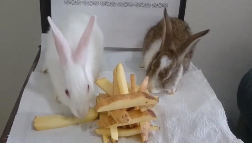 Why Do Rabbits Like To Eat Potatoes