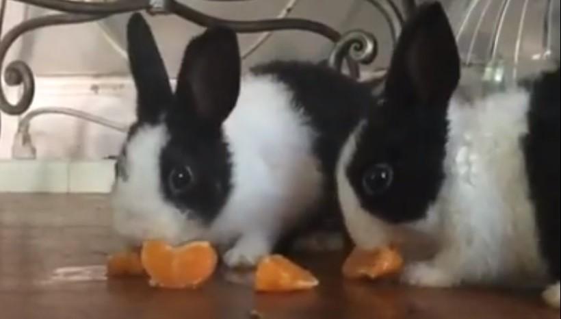 Can Bunnies Eat Orange Peels