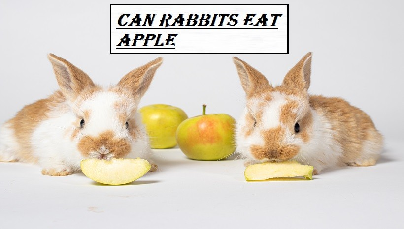 Can Rabbits Eat Apple