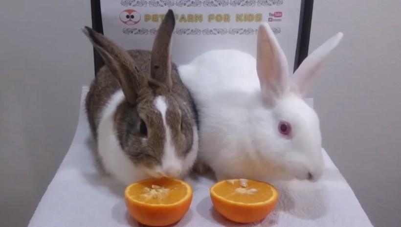 Can Rabbits Eat Mandarin Oranges