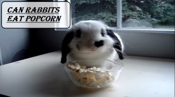 Can Rabbits Eat Popcorn