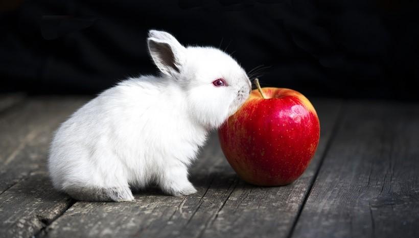 Do Bunnies like apples
