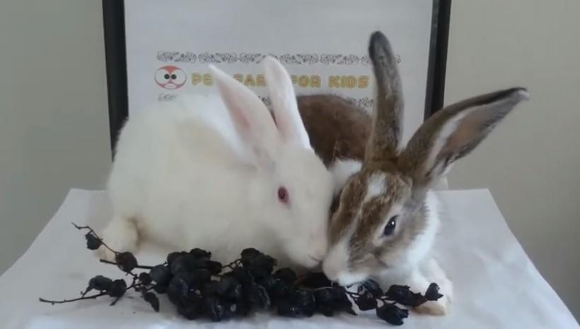 Side effects of raisins