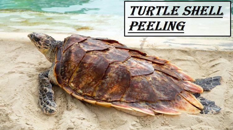 Turtle Shell Peeling