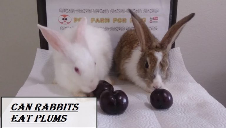 Can Rabbits Eat Plums