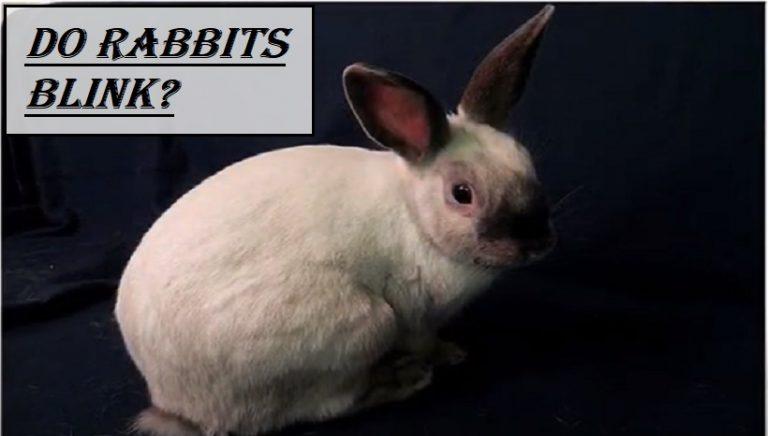 Do Rabbits Blink?