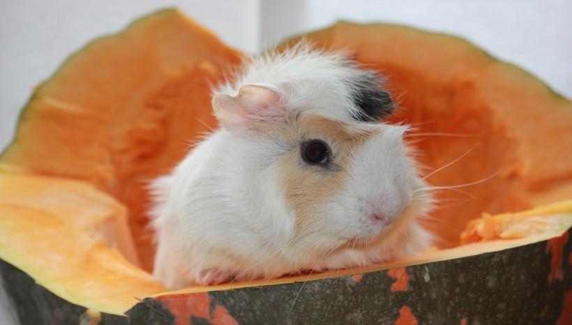 Nutritional Facts of Pumpkin