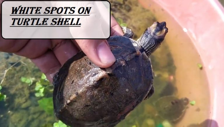 White Spots On Turtle Shell