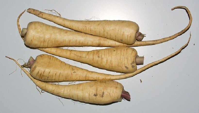 Benefits Of Parsnips For Guinea Pigs